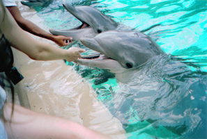 Dolphins1 by bishojolover