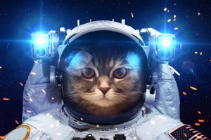 Beautiful cat in outer space by VadimSadovski