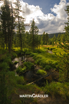 Yellowstone, De Lacy Creek by real-creative