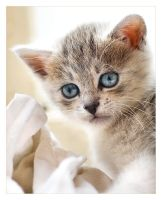 Kitten with a Blankie by antiparticle