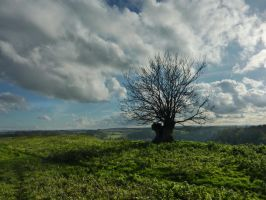 LONE TREE by TADBEER