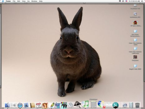 BoB My Bunny Desktop by synnabar