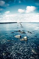 lue by Radiatr
