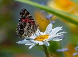 Butterfly by ron831