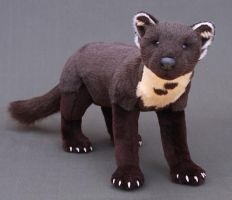 Marty the pine marten by LisaAP