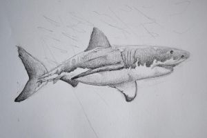 great white by quinnk