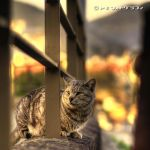 Stray Cat by WindyLife