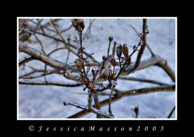 Winter Ice - 1 of 3 by TheBug
