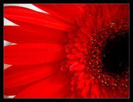 Red-black Flower by PositiveProspection