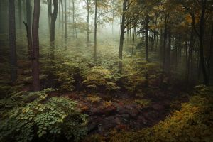 the forest of my dreams IV by JoannaRzeznikowska