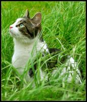 Garden Kitty Crop by Forestina-Fotos