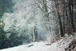 Winter Forest by ElyneNoir