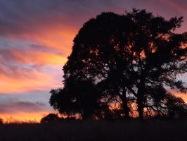 Sunset in the Oaks by Darvia123