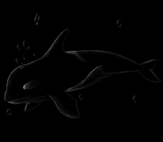 Orca by CrispyCh0colate
