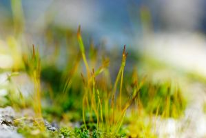 moss in a stone by MarcosRodriguez