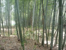 Avery Island Bamboo Forest by snowiki