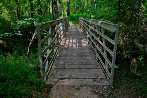 Bridge to Nature by Lioness075