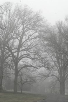 A Haunting Softness by bluemangoimages