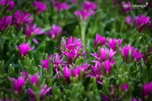Purple in the Green by mjohanson