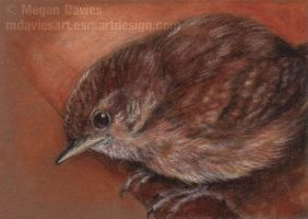 Baby Wren ACEO by Pannya