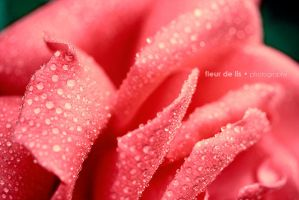 Morning Dew by FDLphoto