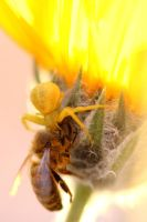 Spider and Bee by sellsworth