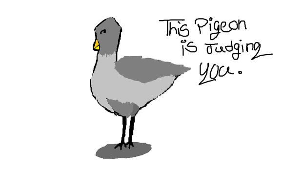 This Pigeon Is Judging You. by supersqish