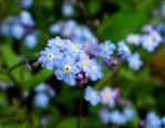 Blue but standing out by FlowerFreak