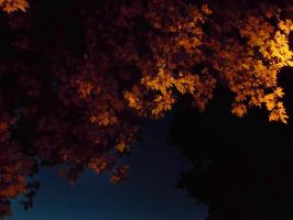 Autumn at night by Jack-a-Lynn