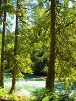 Cedar Trees on Cascade River by sky-2011