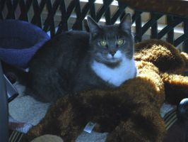 Miss Smokey - February 2010 by LindaLee