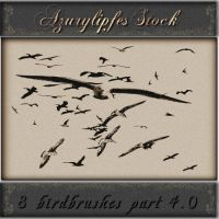bird brushes part 4.0 by AzurylipfesStock