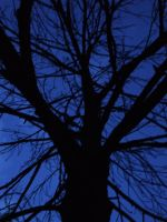 deep blue tree by humanthistime
