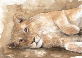Playful Lion ACEO by Pannya
