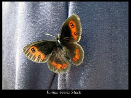 Butterfly by Emma-Feniz