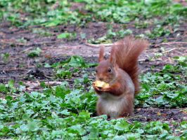 Good lunch Mr squirrel by Momotte2