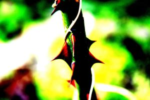 High Contrast Thorns by OptimisticDaydreamer