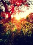 sunset in a garden by Bearsus