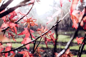 Rain and Autumn by akrPhotography