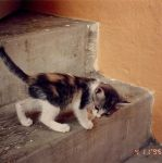 This Step is Re-e-eally High by pergamjee