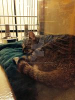 petsmart spring hill cats of day 6/22/14 by michelous