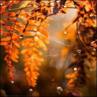 autumn forest: spiders III by amsterdam-jazz