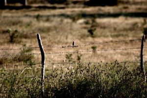barbed wire by artastic21