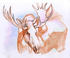 moose sketch by Sedeslav