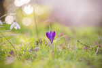 Spring in Holland by Pamba
