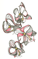 Orchid-1 by RebexTrip