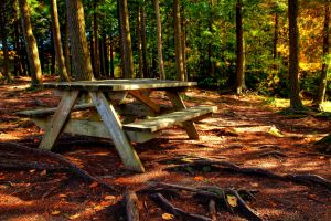 Forest Picnic - HDR by somadjinn
