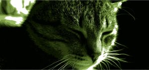 Cat, love green day. by Kr4mon