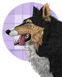 Collie by Beast91