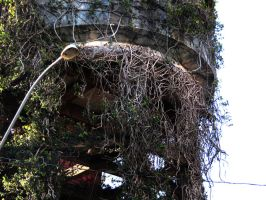 Water Tower - Vines by caiobuca